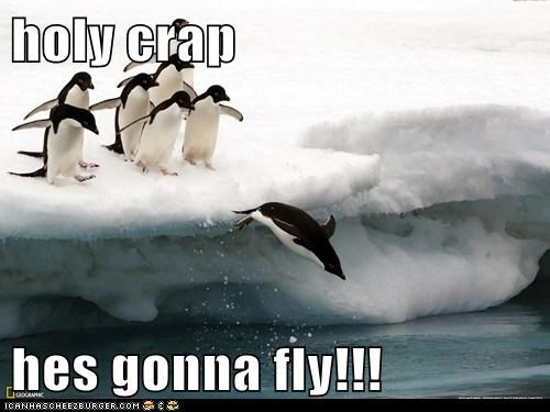 amazing,antarctica,diving,flying,holy crap,penguin