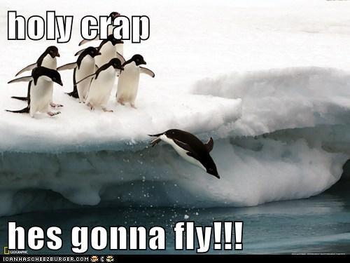 amazing antarctica diving flying penguin - 6483372544