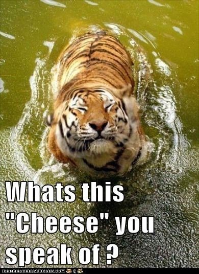 captions cheese smiling swimming taking pictures tiger water what is this - 6483553536