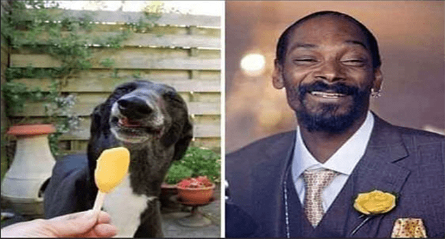 animals that look like celebs