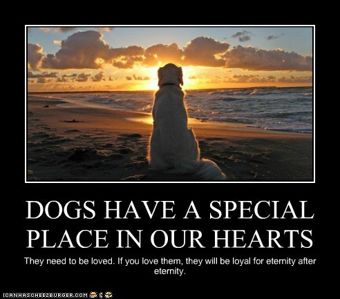 DOGS HAVE A SPECIAL PLACE IN OUR HEARTS They need to be loved. If you love them, they will be loyal for eternity after eternity.