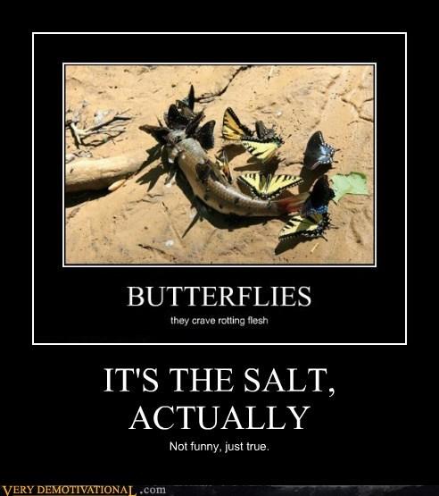 butterflies corpse hilarious salt - 6483896064