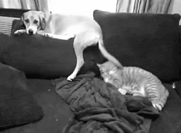 animals being jerks to each other, so rude