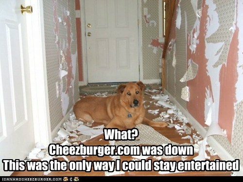 bored cheezburgers destroyed hallway what breed - 6483996928