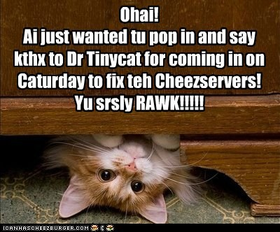 Ohai! Ai just wanted tu pop in and say kthx to Dr Tinycat for coming in on Caturday to fix teh Cheezservers! Yu srsly RAWK!!!!!