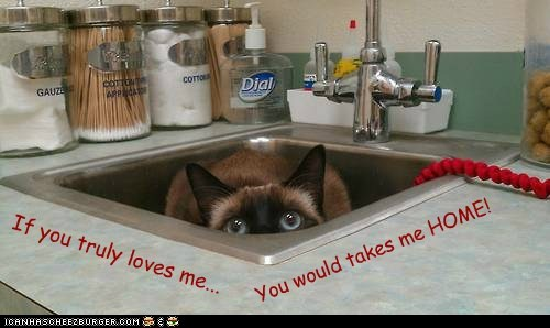 captions Cats leave love sink vet - 6484140800