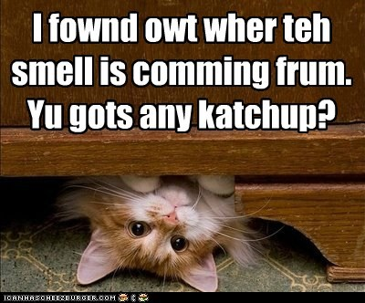 captions Cats eat ketchup nom smell under