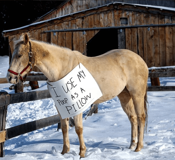 memes of horses next to written signs