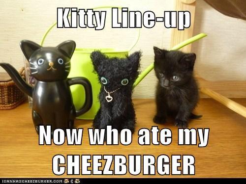 Cheezburger Image 6484258048