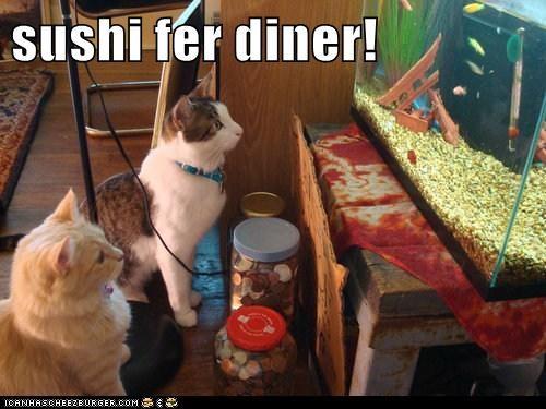Cheezburger Image 6484298240