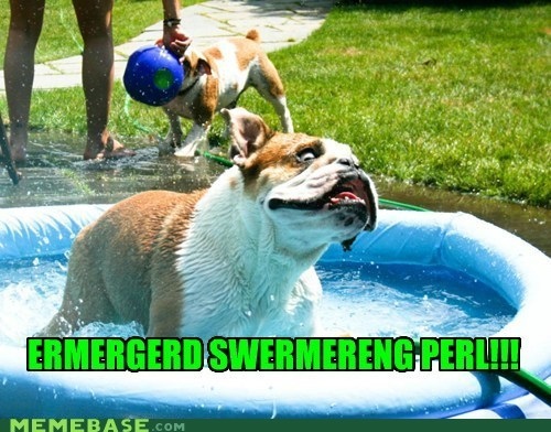 derp dogs Ermahgerd goggie summer swimming pools