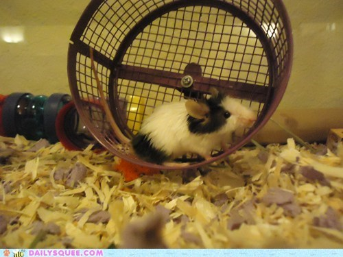 fluff mouse pet reader squee rodent wheel - 6484499200