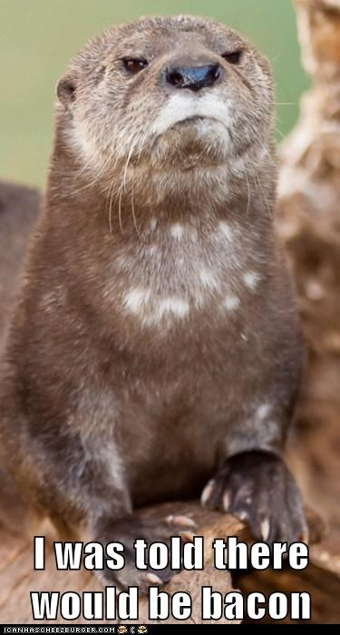 angry bacon disappointed otter - 6484875776