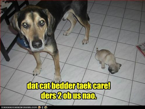 dat cat bedder taek care! ders 2 ob us nao.