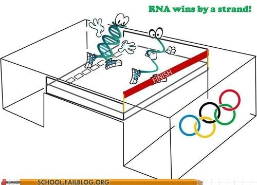 DNA olympics rna wins by a strand