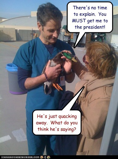 dont-understand,duck,help,important,no time to explain,president,quacking