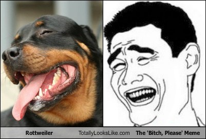 Rottweiler Totally Looks Like The 'Bitch, Please' Meme