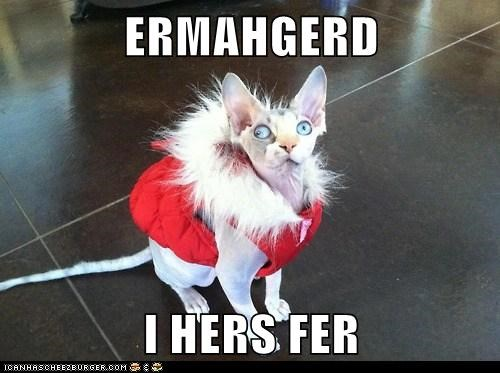 cat Ermahgerd fur kitty pets warm - 6486288896