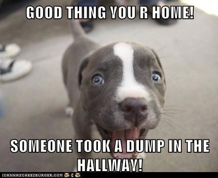 accident,bad news,captions,dogs,pitbull,poop,puppy