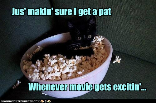 captions,Cats,kitten,love,Movie,pat,Popcorn