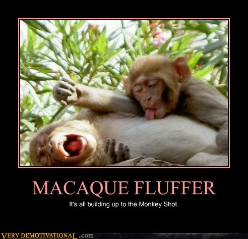very demotivational funny monkey meme that almost looks inappropriate