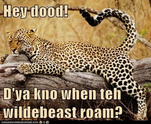 bored cheetah dood tired waiting when wildebeast - 6487402240