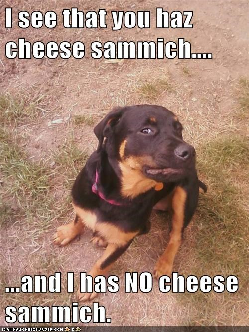 captions cheese dogs not fair sandwich sharing what breed - 6487448064
