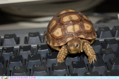 keyboard pet reader squee turtle typing - 6487555840