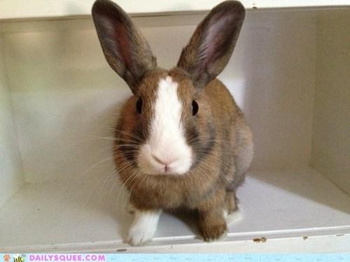 bunny explorer happy bunday pet rabbit reader squee - 6487802112