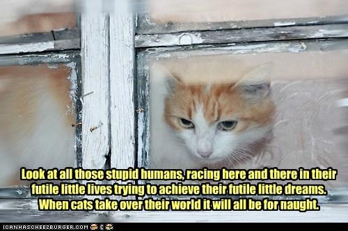 captions Cats ego mighty watch window - 6488096768