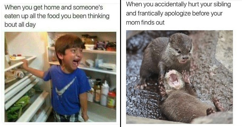 stealing food sibling memes siblings stupid fights family memes parenting fighting family funny memes about siblings brothers and sisters younger siblings older siblings infuriating soccer memes animal memes animals - 6488325