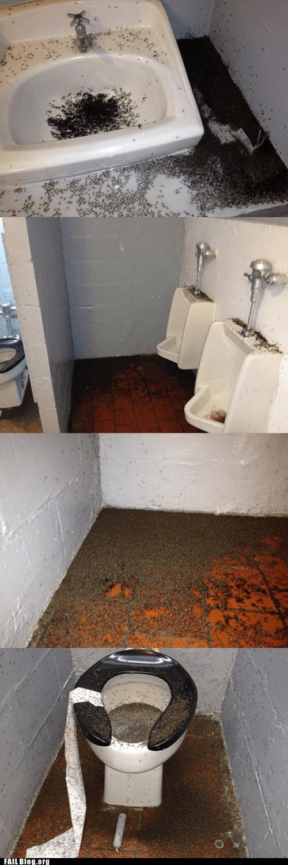 ants,bugs,disgusting,public restroom