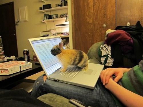 bunny computer happy bunday laptop pet rabbit reader squee research - 6488553472