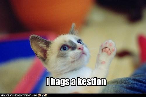 ask captions Cats question teacher test - 6488567296
