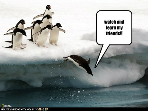 diving,master,penguins,swimming,teaching,watch and learn