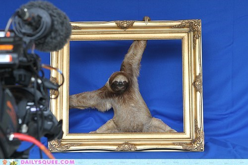 model,photo shoot,squee,picture frame,sloth