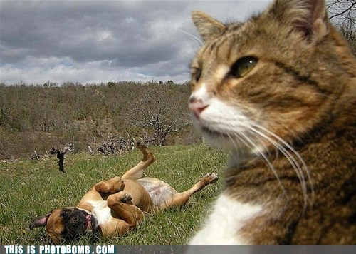 Animal Bomb animals cat dogs fun - 6488772608