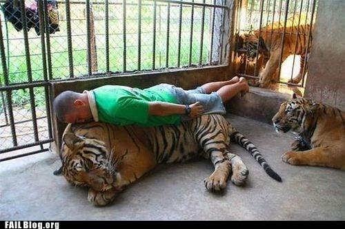 Planking,tiger