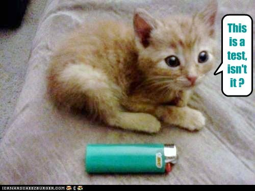 captions Cats fire kitten lighter pyromania test