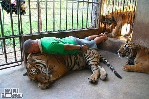 animals Planking scary tiger what zoo - 6488962560