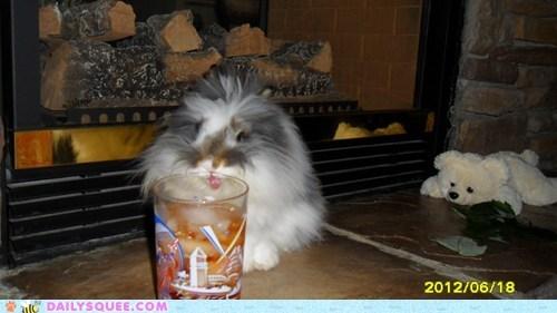 bunny happy bunday pet rabbit reader squee summer - 6488986880