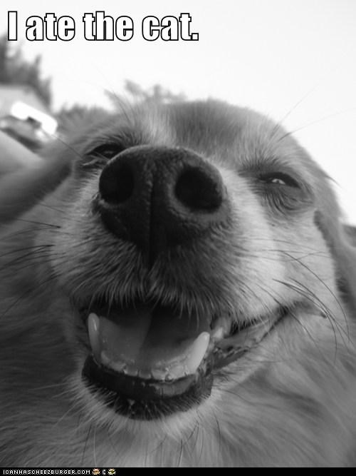 ate him cat dogs happy pomeranian smile smug - 6488996096