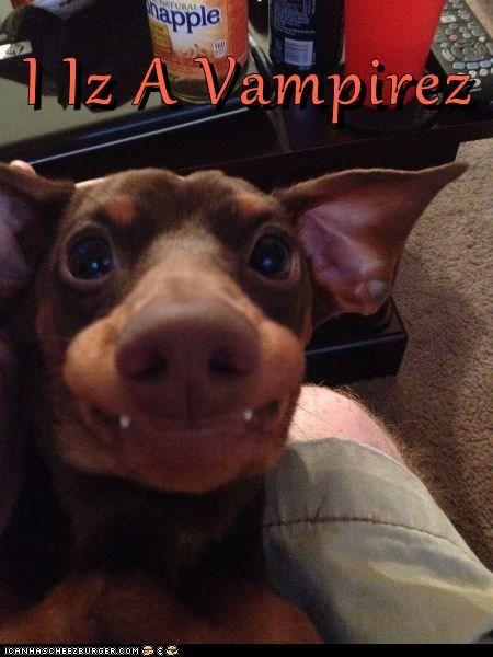 derp dogs fangs goggie vampire - 6489135872