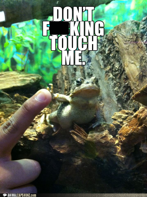 angry blocked dont-touch-me stop toad - 6489143040