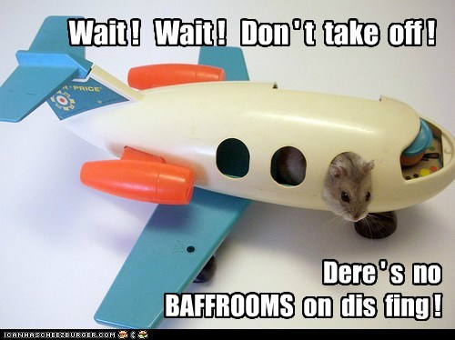 cheap hamster inadequate plane wait - 6489199104