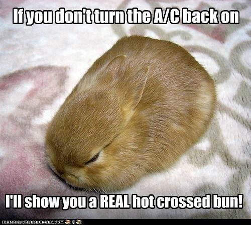 ac angry bunny crossed hot nursery rhyme - 6489253376