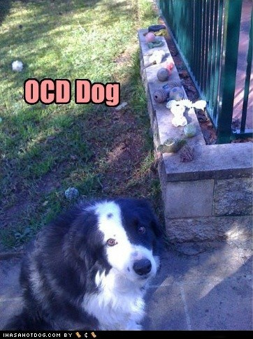 backyard,dogs,ocd,organizer,toys,what breed