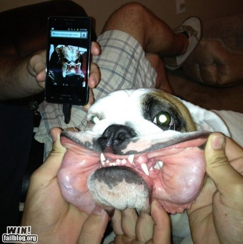 alien,dogs,g rated,nerdgasm,Predator,resemblance,totally looks like,win