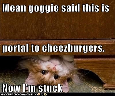 Cheezburger Image 6489506816