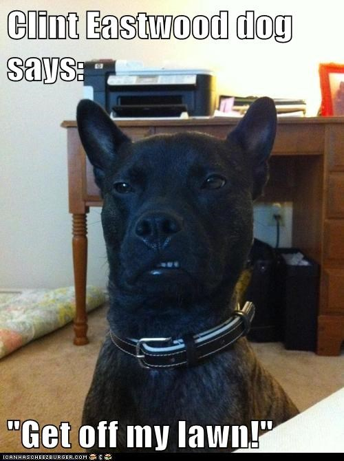 captions,Clint Eastwood,dogs,growl,grumpy,snarl,what breed